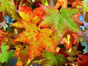 bigstockphoto_Autumn_Background_150400